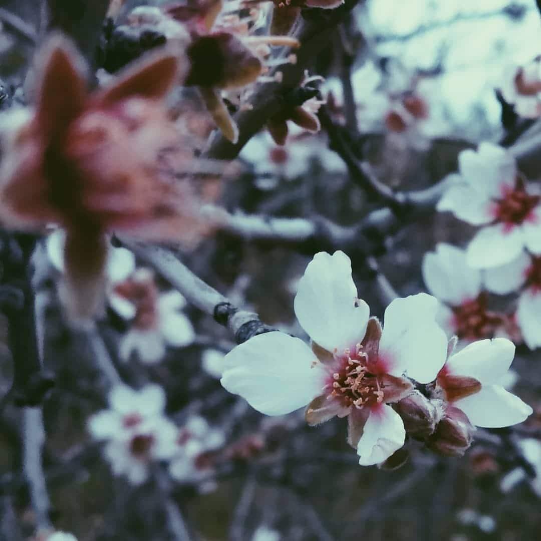 Λουλούδι-Βλάσης Κοζώρης